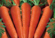 wortel-carrot Copy