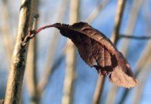 brown-leaf-1340361-m Copy
