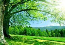 Summer-Nature Copy