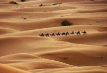 Padang-pasir-ilustrasi Copy