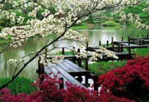 japanese-garden Copy