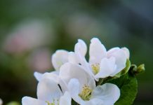 flowers of app Copy