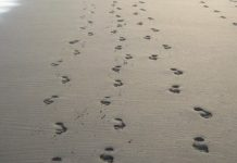 footprints- Copy