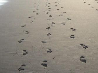 footprints- Copy