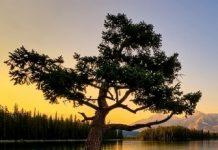 Nature-wood-rvr Copy