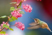 Bird and Flowers Copy