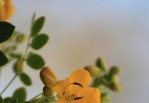 yellowish-flower Copy