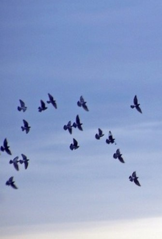 birds sky Copy