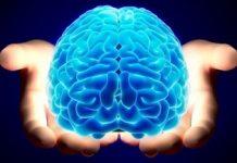 keistimewaan-otak-manusia Copy