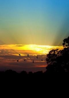 birds flying sunset Copy 240x338