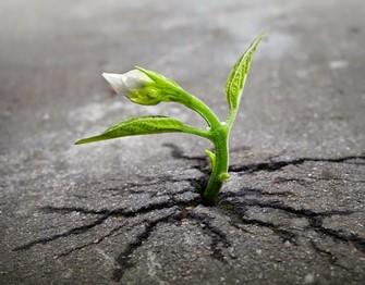 tanaman yang tak pernah mau menyerah Copy
