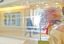 cip otak